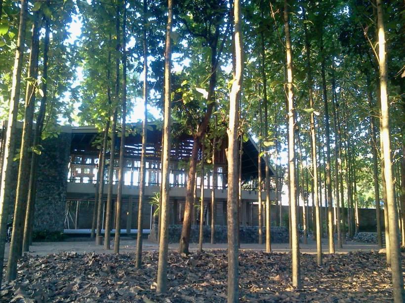 Di sinilah Klinik Kopi berada. Di antara pepohonan jati.